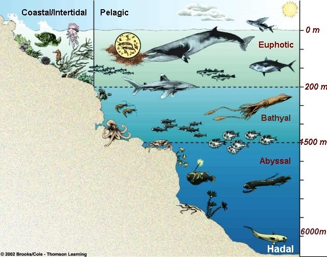 Table Marine Life Zones