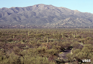 Photo of Saguaro Park East, with saguaros and mountains in background
