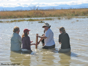 Professor and students wading in water taking measurements