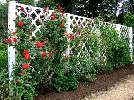A Lattice That We May All Be Familar With Is A Rose Garden ...